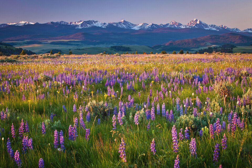 Märchenhafte Blumenwiese