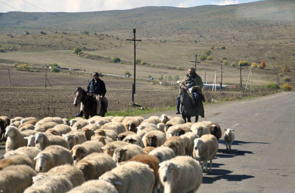Almabtrieb auf Kaukasisch