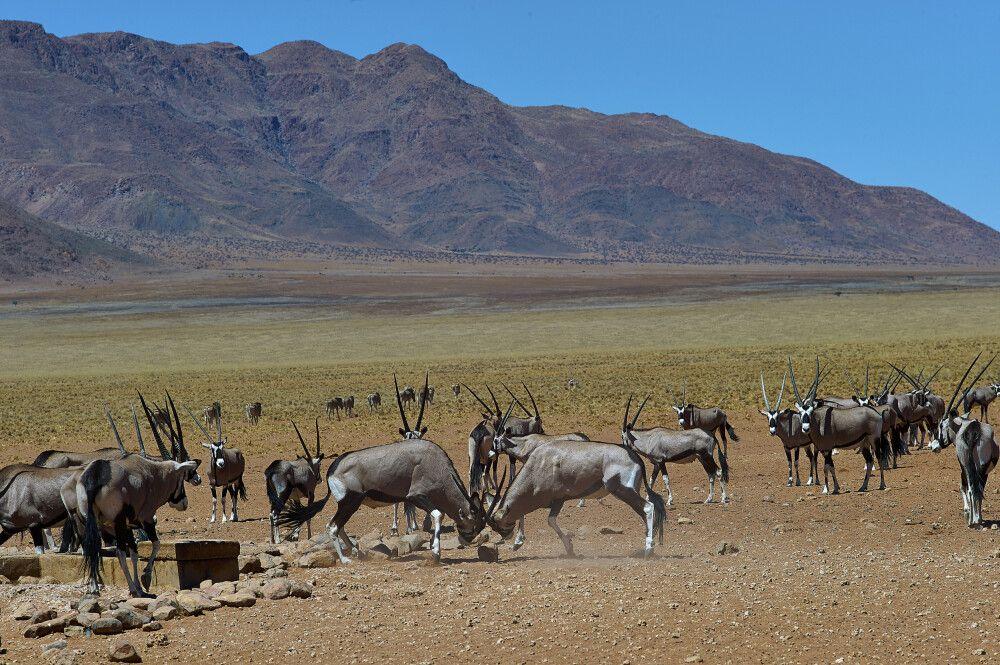 Namibia – der Süden