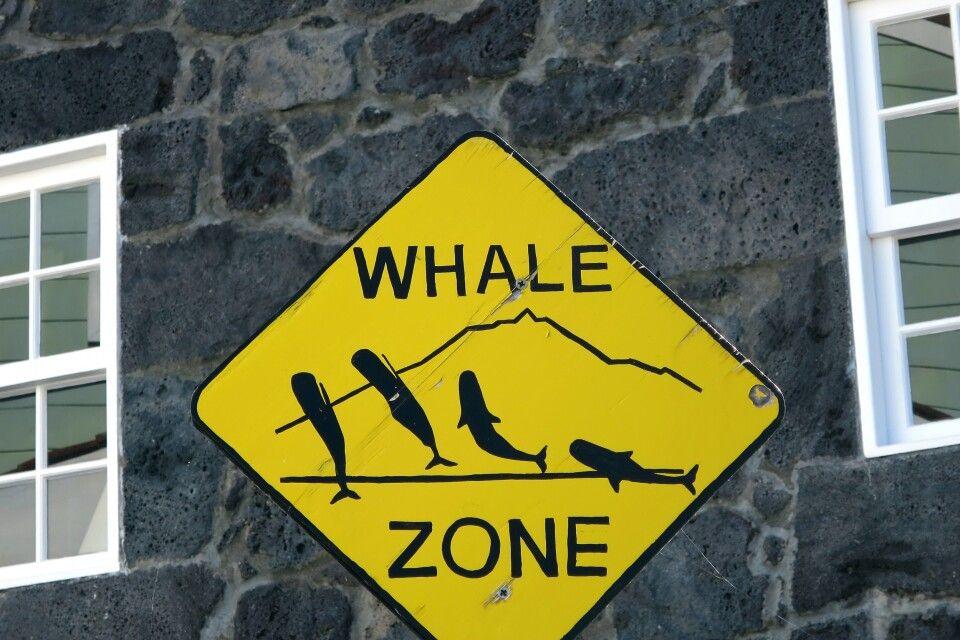 Wal-Warn-Schild