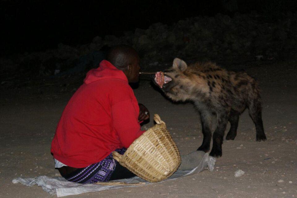 Hyänenfütterung bei Nacht
