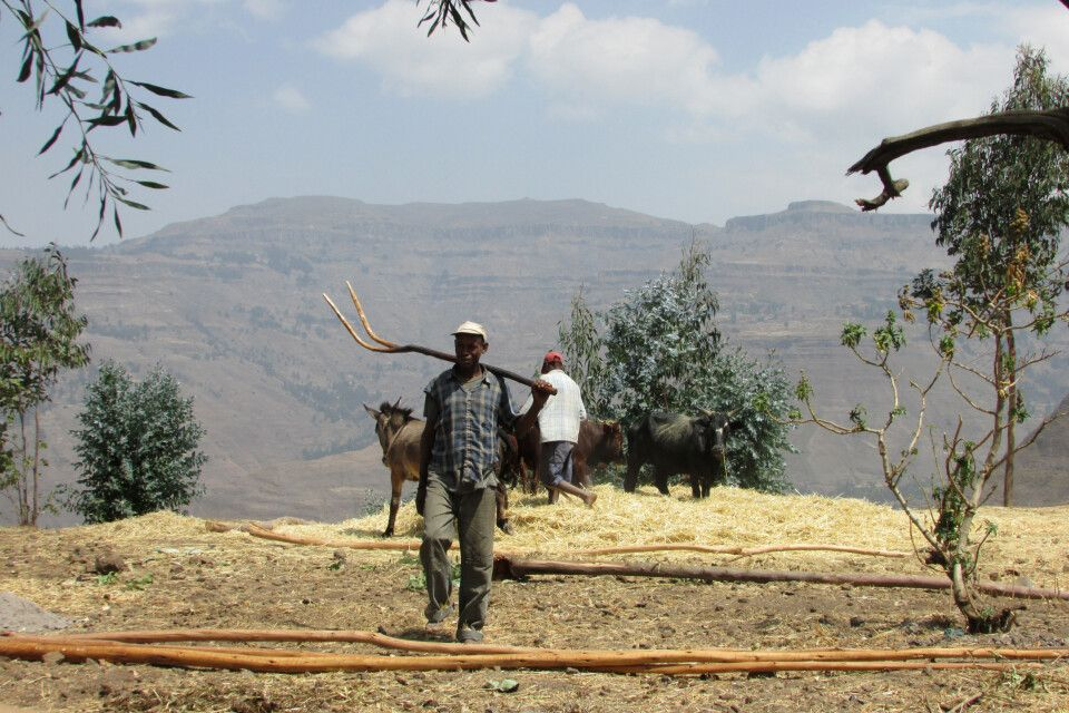 Bauern beim Getreide dreschen in Lalibela