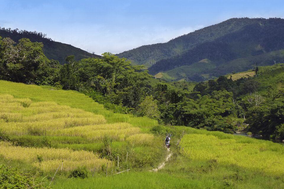 Durch den Masoala Nationalpark
