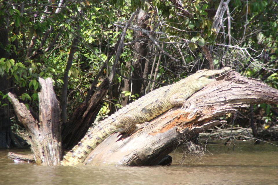 Krokodil nimmt Sonnenbad