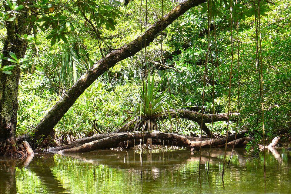 geheimnisvolle Mangrovenwelt