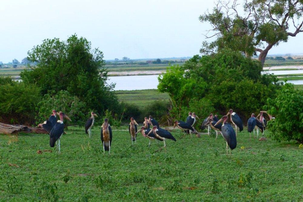 Marabugruppe