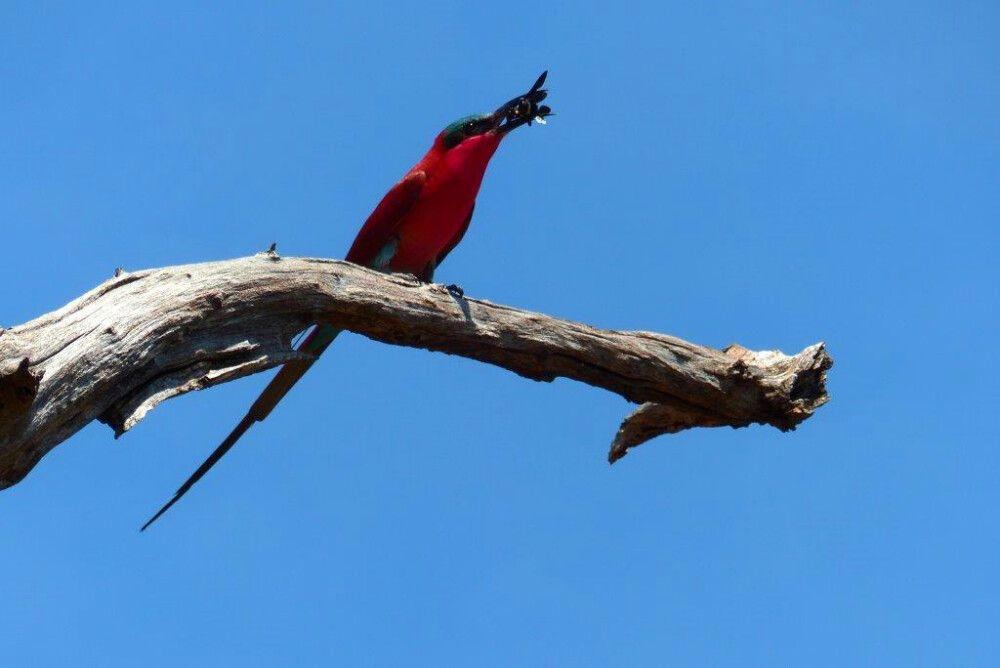 erfolgreicher Vogel