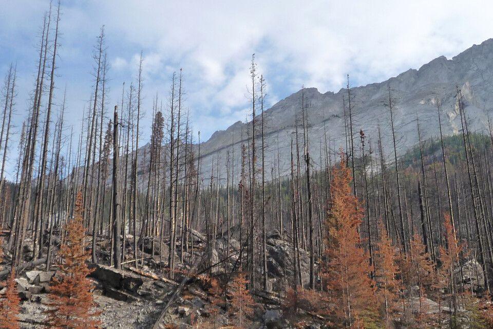 Auch in Alberta gab es im Sommer viele Waldbrände