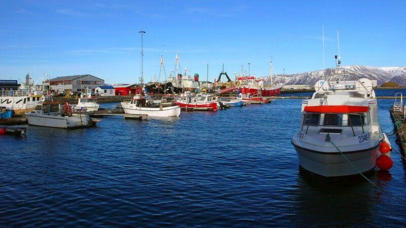Kleine Fischerboote im Hafen von Reykjavík © Diamir
