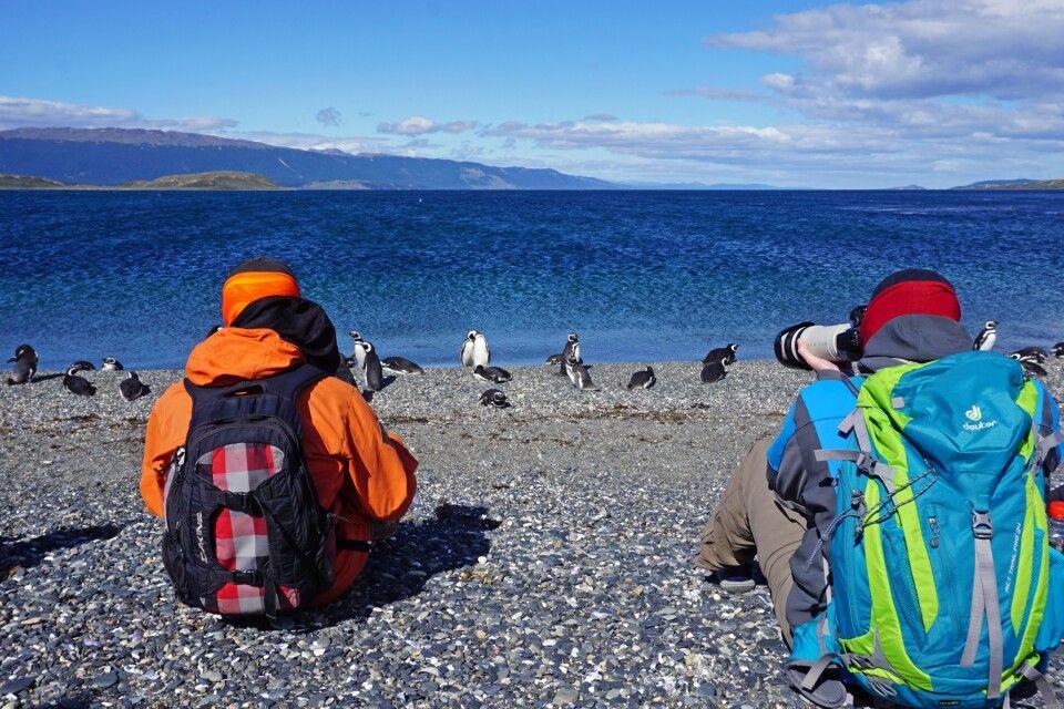 Bei den Magellanpinguinen auf der Isla Martillo