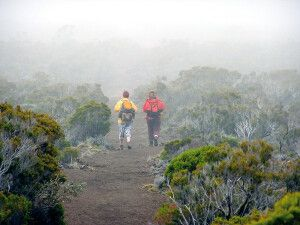 Wandern im Nebel