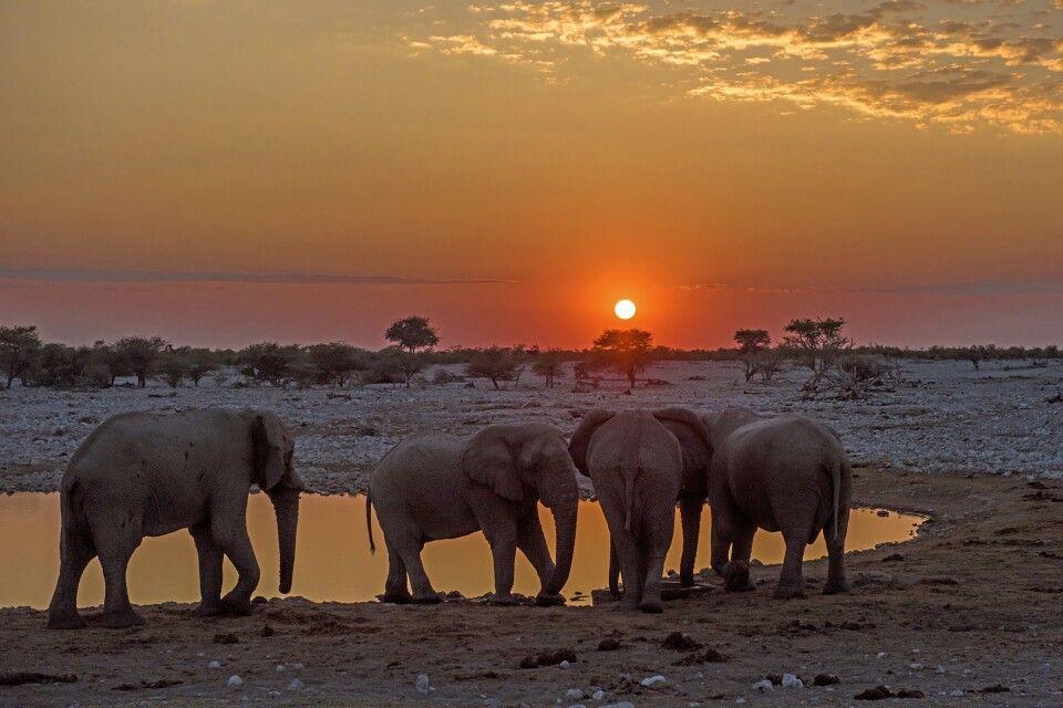 Sonnenuntergang im Etosha NP
