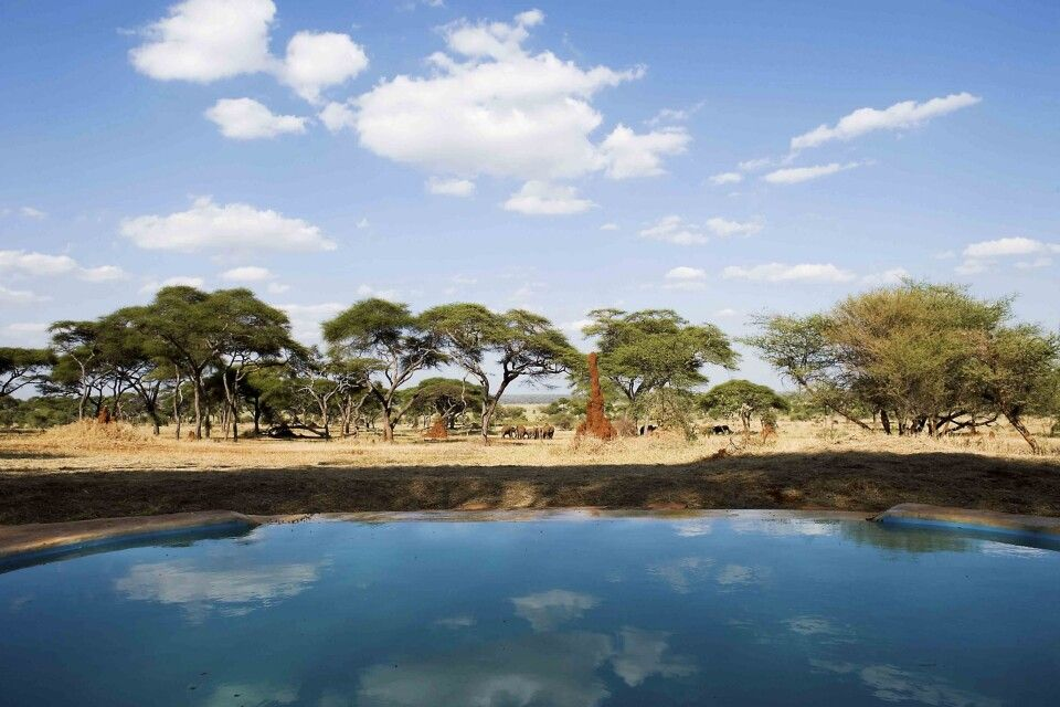 Pool des Swala Camps