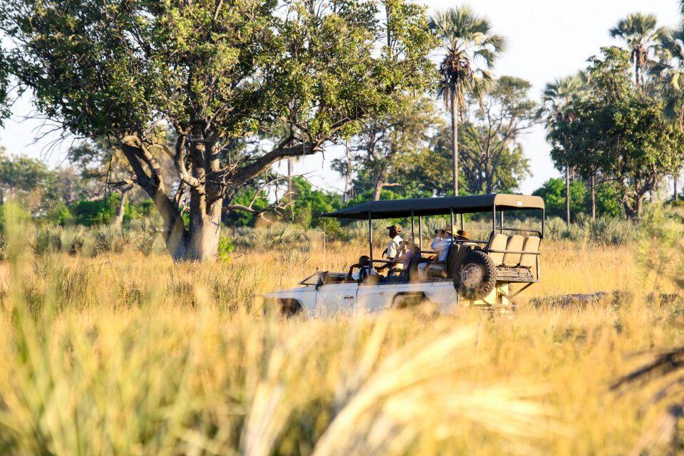 Auf Safari im Okavango-Delta