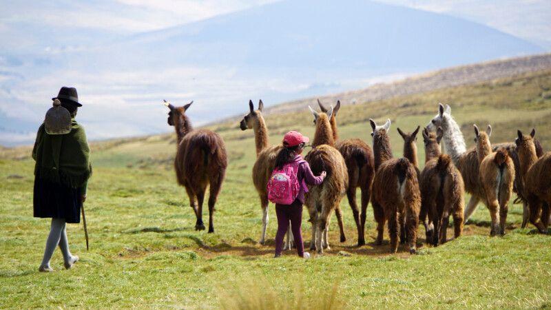 Eine Familie treibt ihre Lama-Herde nach Hause. © Diamir