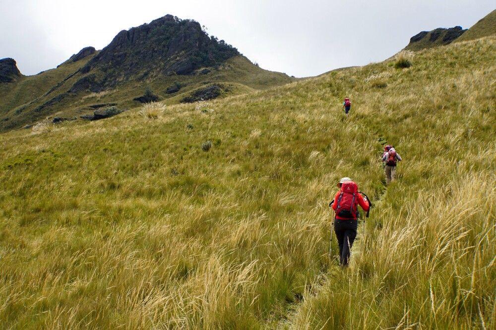 Durch hohes Paramo-Gras zum Gipfel des Pasachoa (4200m)