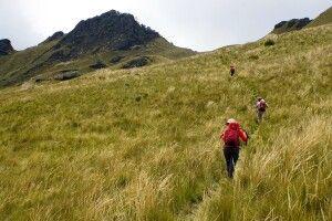 Durch hohes Paramo-Gras zum Gipfel des Pasachoa (4200 m)