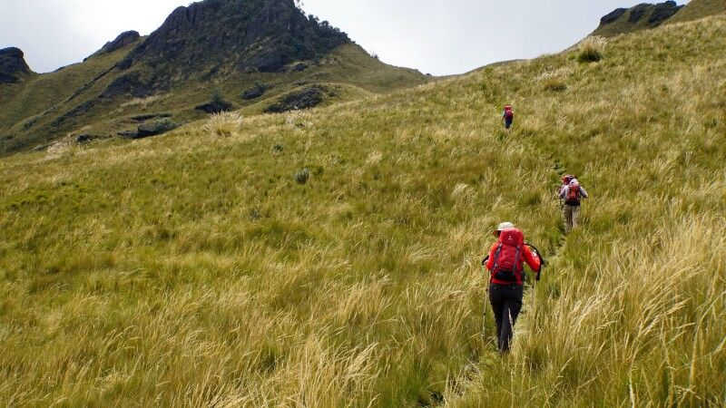 Durch hohes Paramo-Gras zum Gipfel des Pasachoa (4200m) © Diamir