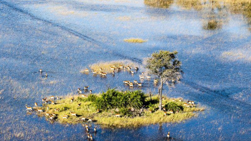 Antilopen im Okavango-Delta © Diamir