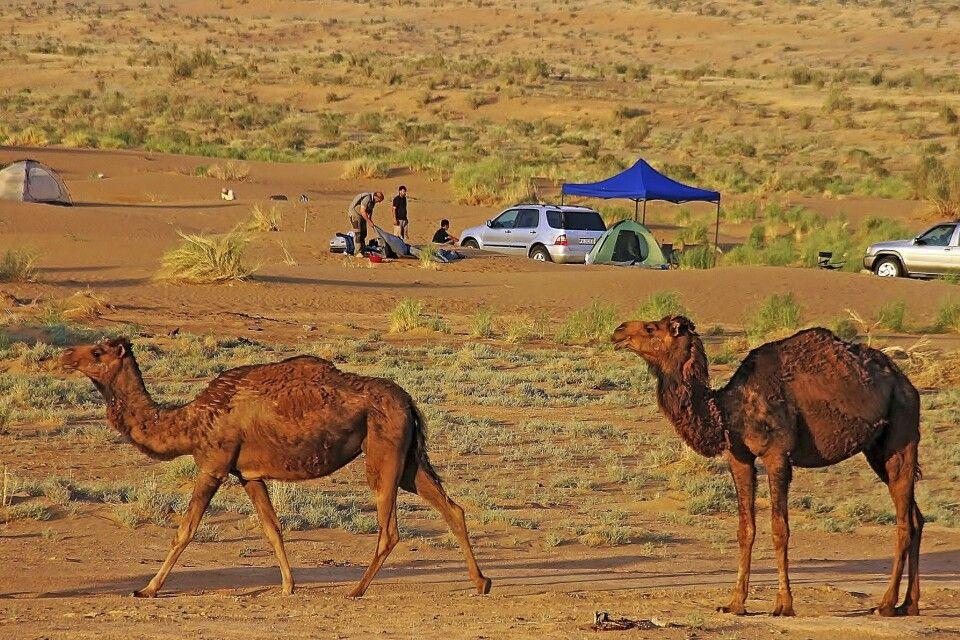 Camping mit Kamelen