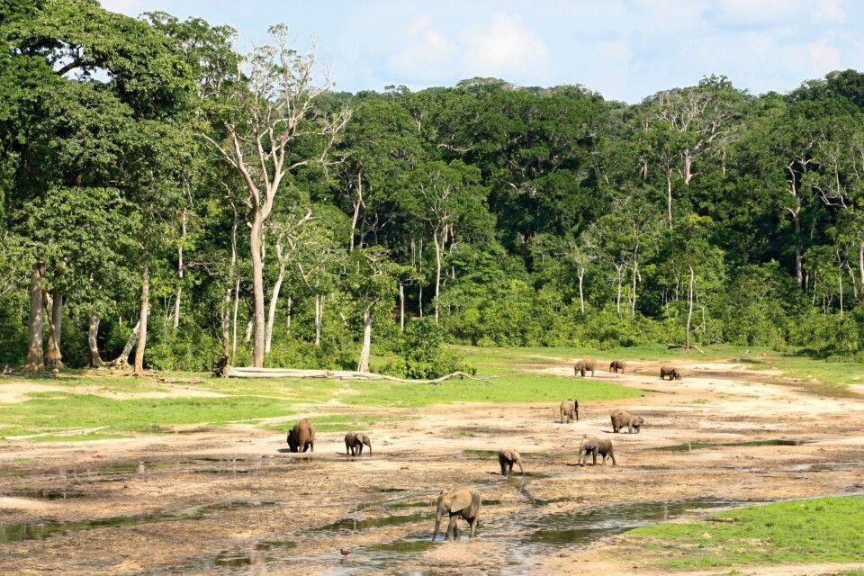 Dzanga-Sangha-Nationalpark