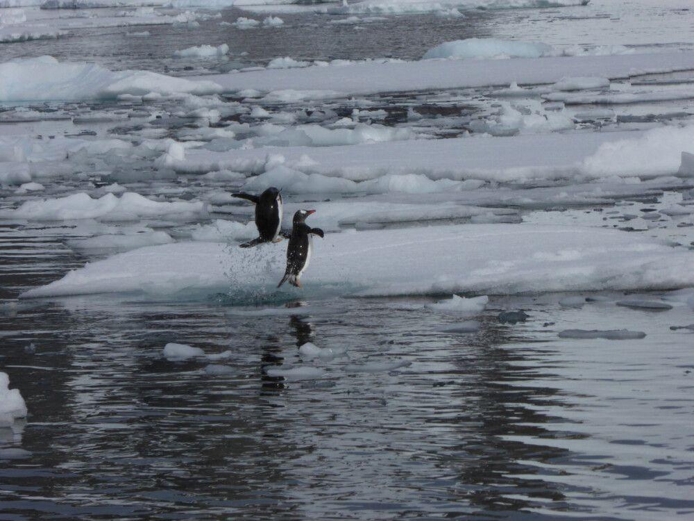 Sportliche Pinguine