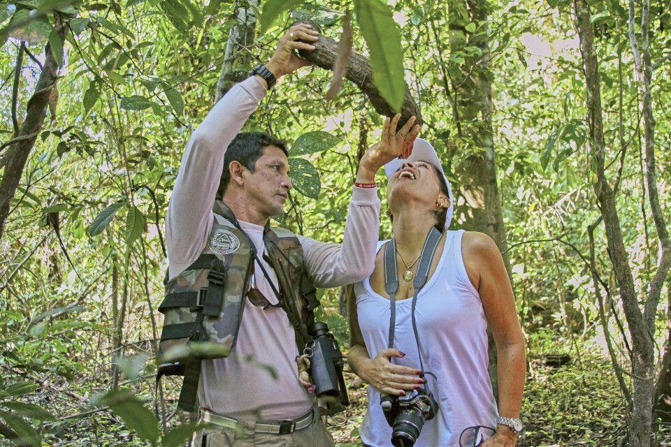Wie man im Dschungel überleben kann