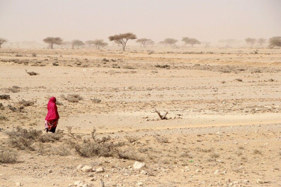 Dürre setzt den Nomaden zu