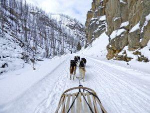 Die verschneite Natur mit dem Hundeschlitten erkunden
