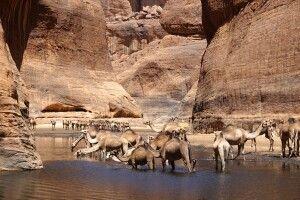 Kamele im Guelta
