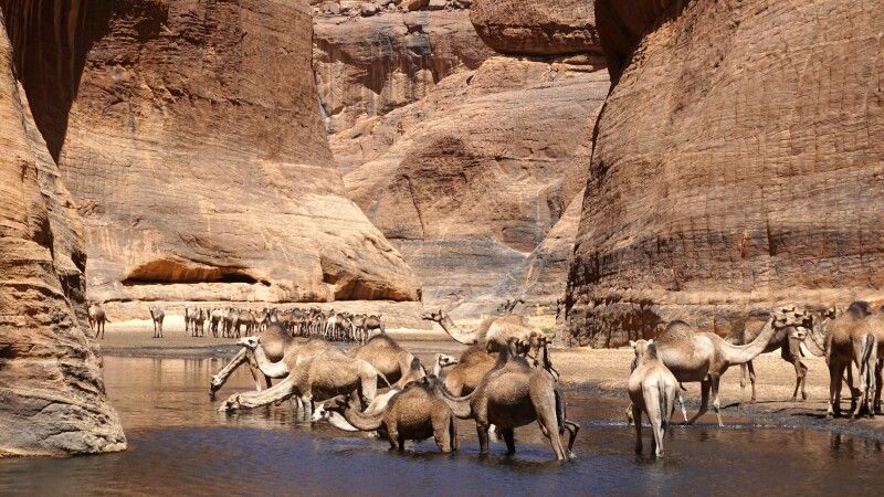 Kamele im Guelta © Diamir