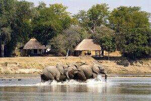 Elefantenbesuch im Nsefu Camp