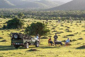 Sundowner im Busch mit den Giraffen