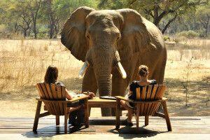 Elefantenbesuch im Old Mondoro Camp