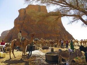 Kamelkarawane im Ennedi