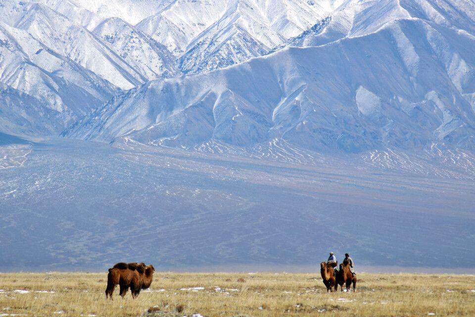 Kamele in der Har-Us-nuur-Ebene
