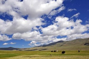 Steppe in der Westmongolei