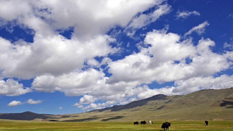 Steppe in der Westmongolei © Diamir