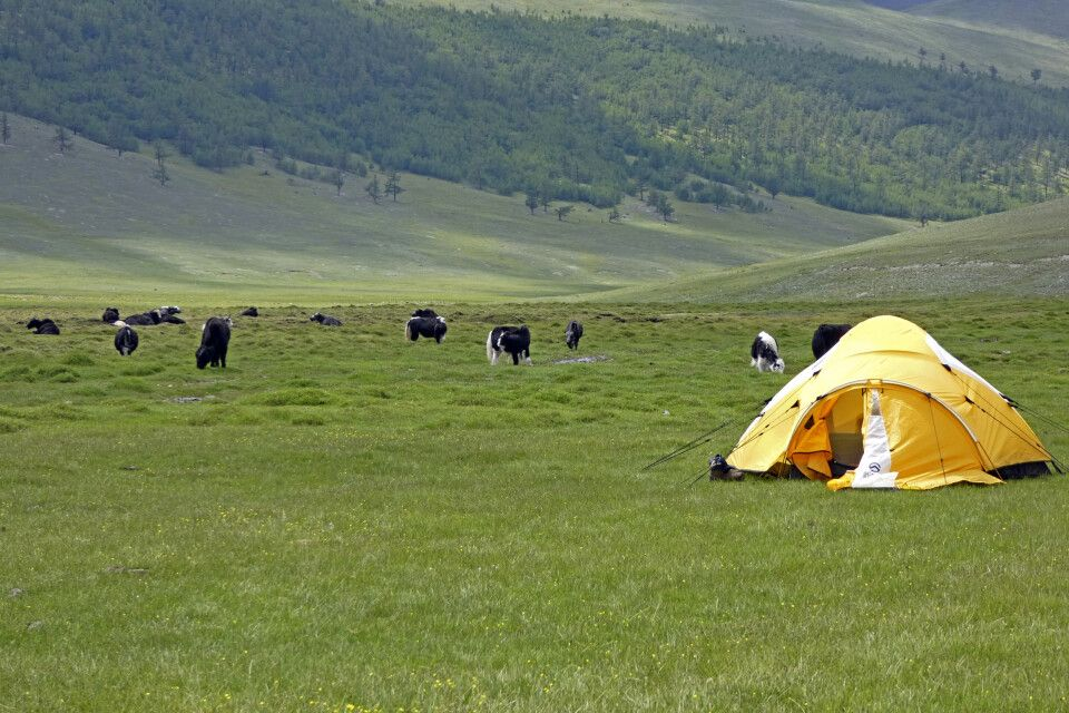 Zelt in Steppe