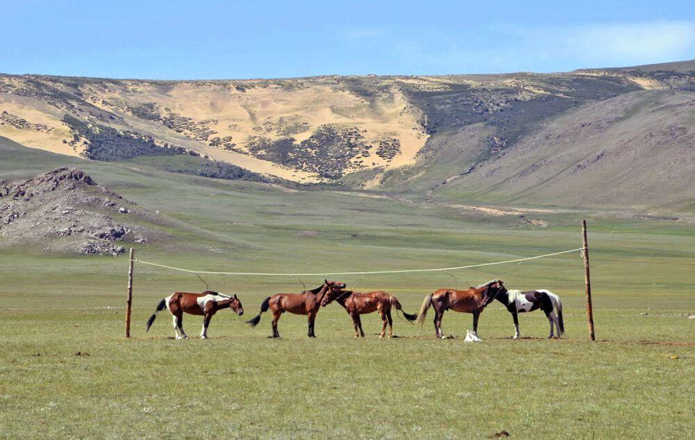 Pferde festgemacht