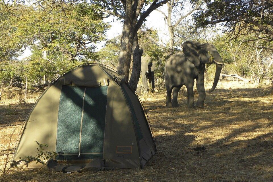 Botswana Moremi Campsite, Zeltübernachtung