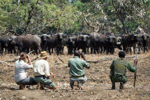 Tierbeobachtung auf einer Fußsafari