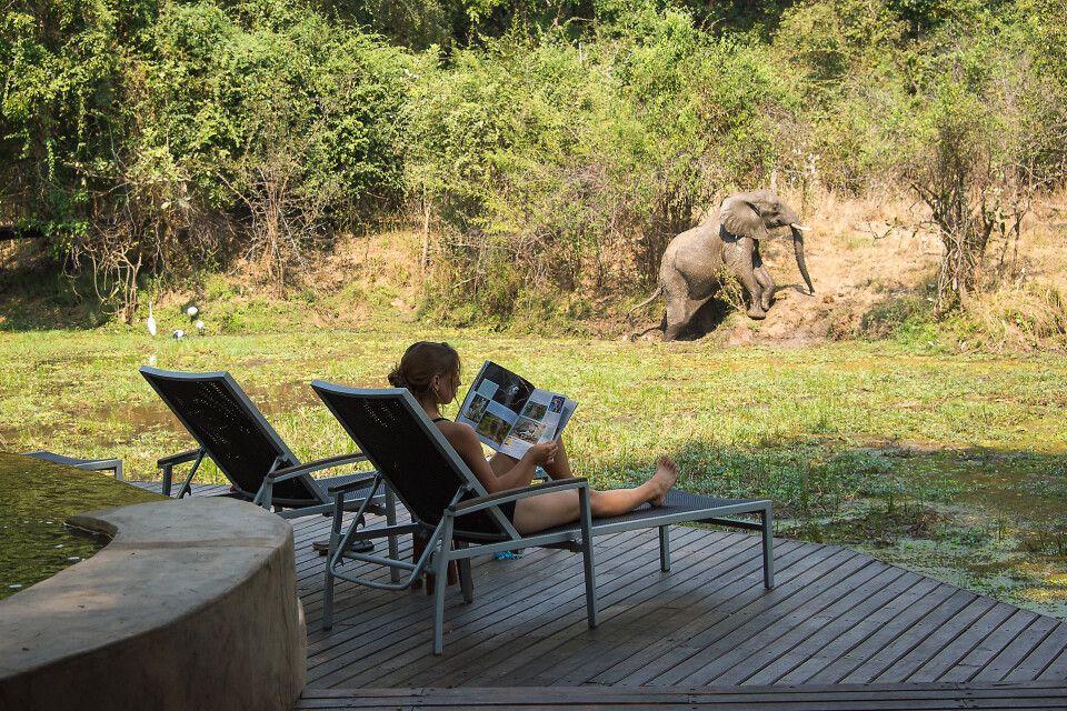 Elefantenbesuch in dem Nkwali Camp