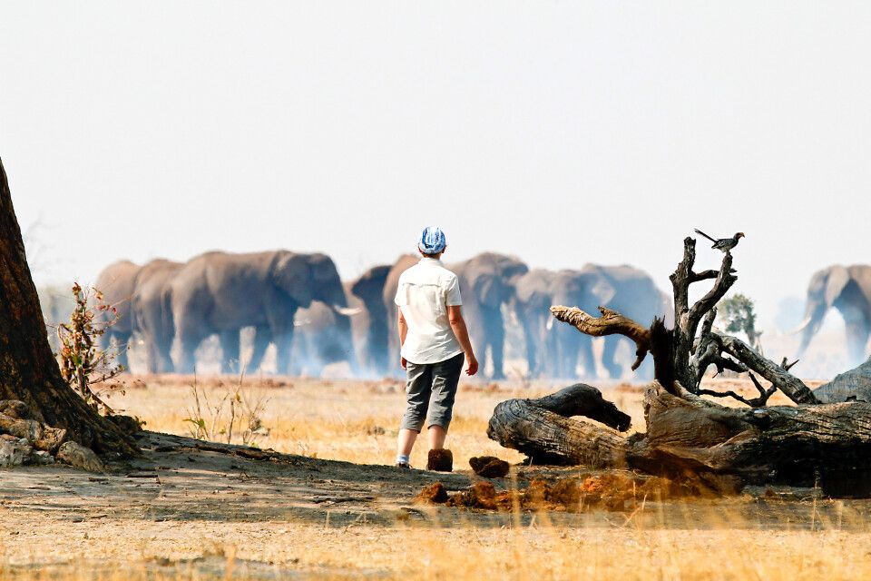Fußsafari in Botswana