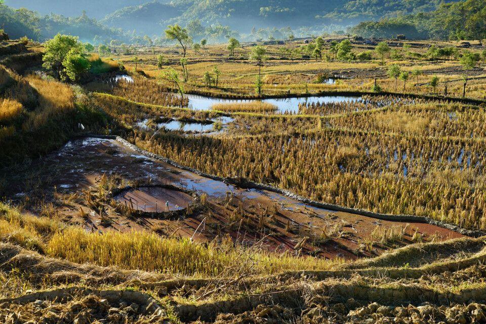 die Reisterrassenrund um Kohima leuchten zum Sonnenaufgang