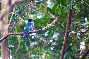 Farbenfrohe Fauna