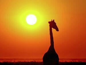 Auf wiedersehen in Afrika