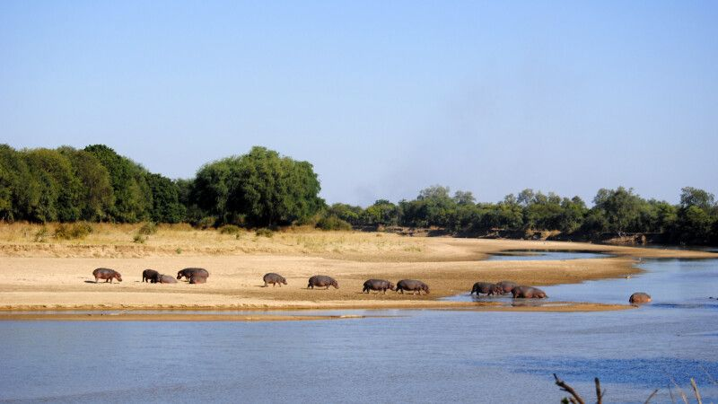 im South Luangwa NP © Diamir