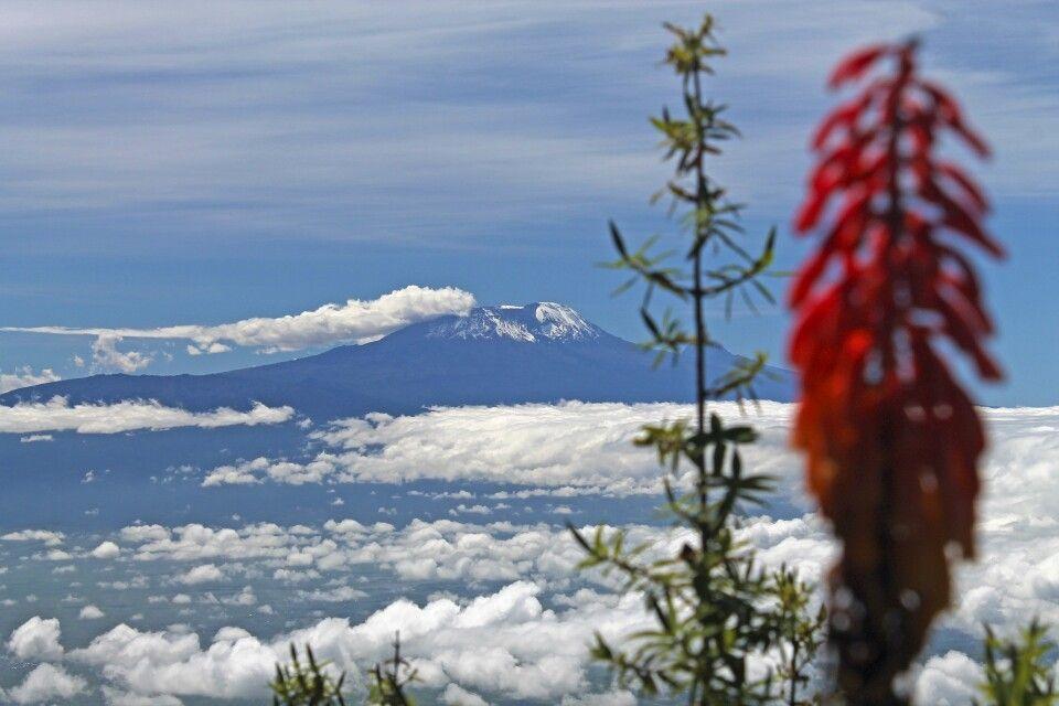 Blick vom Meru auf den Kilimanjaro