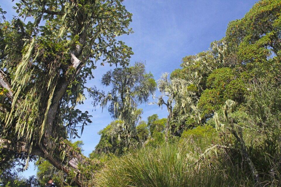 Märchenwald am Mount Meru